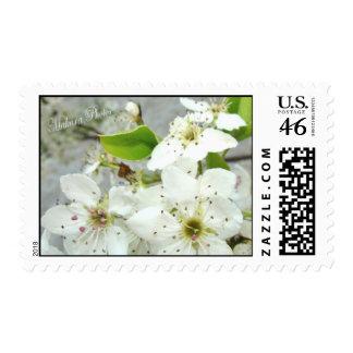 Fruta blanca Blossoms-3 Franqueo