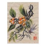 Fruta china del Loquat Tarjetas Postales