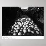 Fruta cítrica de la cosecha, enero de 1956 por Ans Impresiones