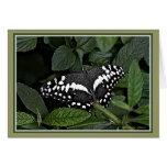 Fruta cítrica Swallowtail, Tarjeta De Felicitación