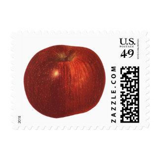 Fruta de la comida del vintage, Apple red Sellos Postales
