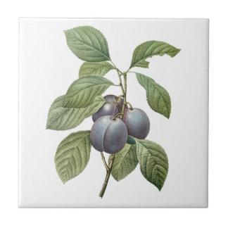 Fruta de la comida del vintage, ciruelos púrpuras  teja cerámica