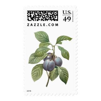 Fruta de la comida del vintage, ciruelos púrpuras estampillas