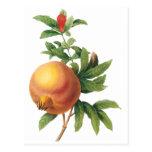 Fruta de la comida del vintage, granada por Redout