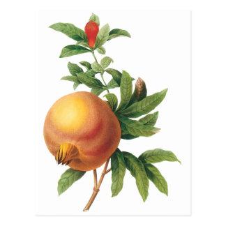 Fruta de la comida del vintage, granada por postal