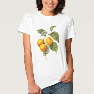 Fruta de la comida del vintage, melocotón del camisas