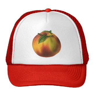 Fruta de la comida del vintage, melocotón orgánico gorras de camionero