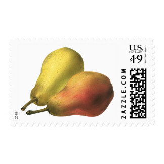 Fruta de la comida del vintage, peras maduras envio