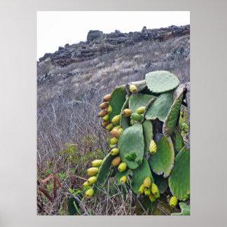 Fruta de los cactus de la pera de Prickley Póster