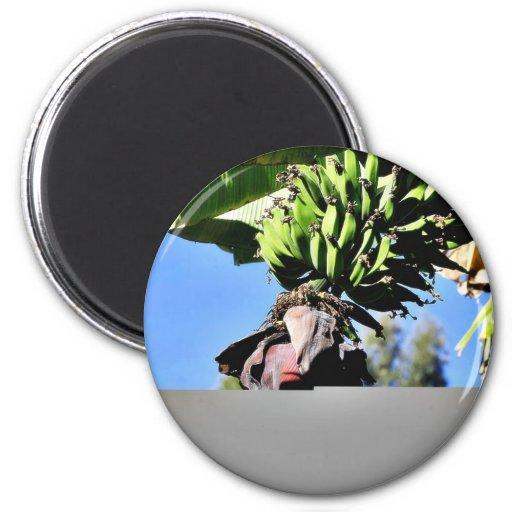 Fruta de los plátanos imanes para frigoríficos