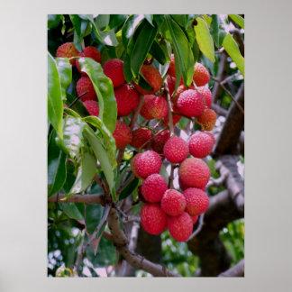 Fruta de Lychee Póster