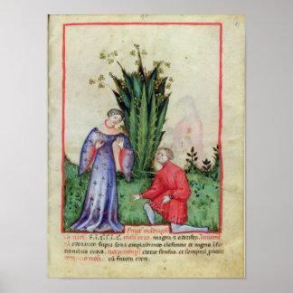 Fruta de Mandrake, from Tacuinum Sanitatis Póster
