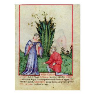 Fruta de Mandrake, from Tacuinum Sanitatis Tarjetas Postales