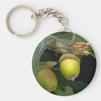 Fruta de roble de Gary (garryana del quercus) Llavero Redondo Tipo Pin