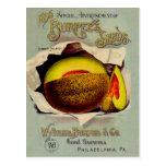 Fruta del cantalupo del Victorian de la publicidad Postal