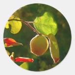 Fruta del membrillo en árbol etiqueta redonda