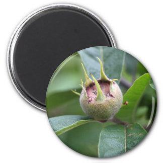 Fruta del níspero común imán redondo 5 cm