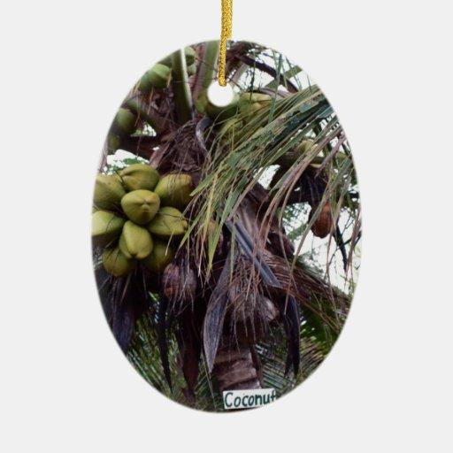 Fruta en árbol en Belice Adorno Para Reyes