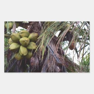 Fruta en árbol en Belice Pegatina Rectangular
