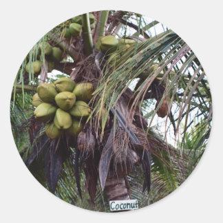 Fruta en árbol en Belice Pegatina Redonda
