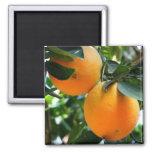 Fruta fresca - imán de los naranjas