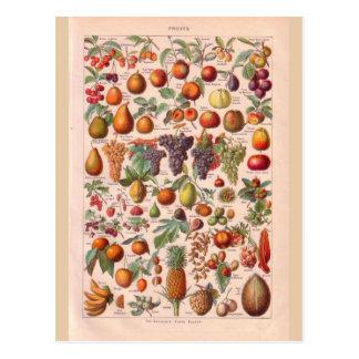 Fruta histórica del vintage postal