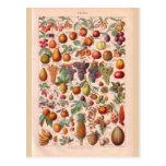 Fruta histórica del vintage tarjetas postales