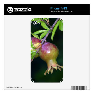 Fruta verde de la granada calcomanías para el iPhone 4S