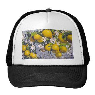 Fruta y flores de la uva en la Florida Gorra