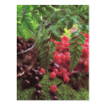 Fruta y verduras, cerezas y redcurrants postales