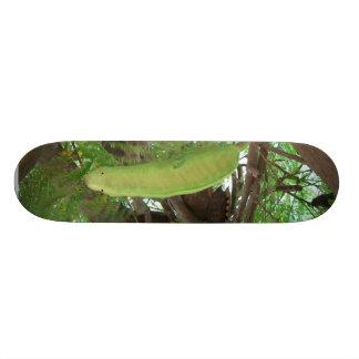 Frutas de la vaina en árbol patines