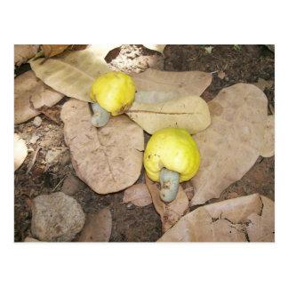 Frutas del anacardo, Nigeria Tarjetas Postales