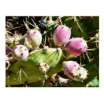 Frutas del cactus tarjeta postal