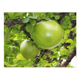 Frutas exóticas de Maja Postal