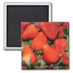 frutas rojas de la fresa iman de frigorífico