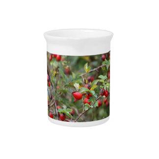 Frutas rojas del rosa de perro jarras