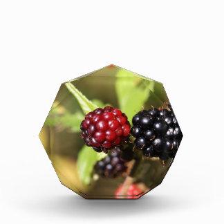 Frutas rojas y negras de la zarzamora
