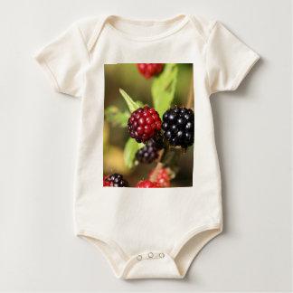 Frutas rojas y negras de la zarzamora mameluco