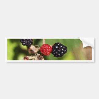 Frutas rojas y negras de la zarzamora pegatina para auto