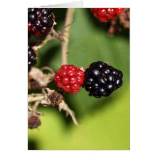 Frutas rojas y negras de la zarzamora tarjeta de felicitación
