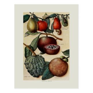 Frutas tropicales tarjetas postales