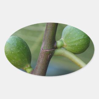 Frutas verdes de una higuera común pegatina ovalada