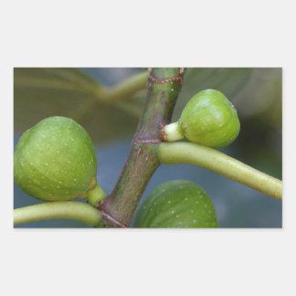 Frutas verdes de una higuera común pegatina rectangular