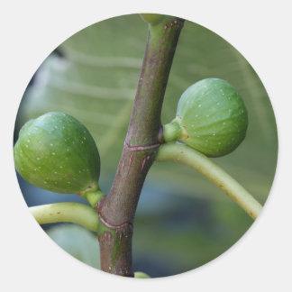 Frutas verdes de una higuera común pegatina redonda