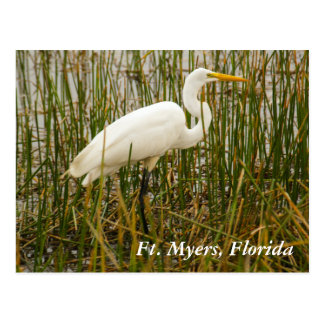 Ft. Myers postcard