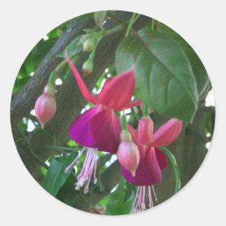 Fuchsia 2 classic round sticker