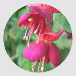 Fuchsia 4 classic round sticker