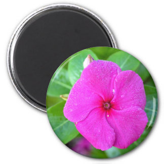 Fuchsia and Green Magnet