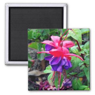 Fuchsia 'Blue Eyes' 2 Inch Square Magnet