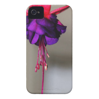 Fuchsia Case-Mate iPhone 4 Case